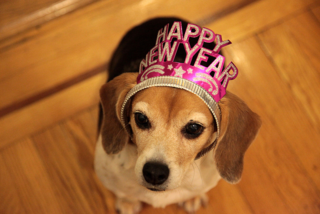 cute dog wearing a New Year's tiara